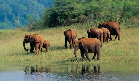 Thekkady – Travel from Madurai to the scenic, serene and explore this dense mountain forest near Kerala