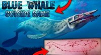 Teen's Suicide Linked To Blue Whale; 75 More Playing, Suspect Tamil Nadu Police